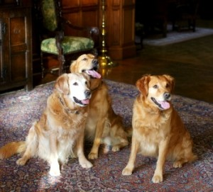 Dogs-005 low res 2